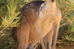 Australie_Kalbari 2 (Copier)