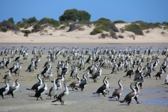 Australie_Shark Bay 2 (Copier)